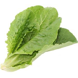 baby-romaine-lettuce