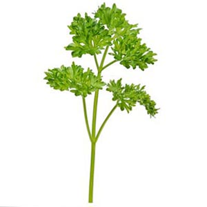 curley-parsley