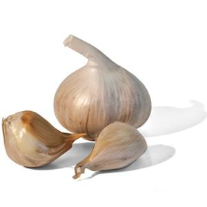 elephant-garlic